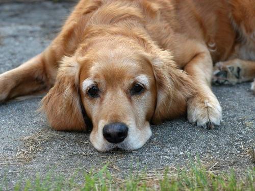 Ваши мечты могут не совпадать с желаниями вашей собаки