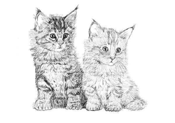 Кошка - самое популярное домашнее животное