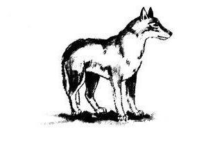Даже волк может быть добрым и милым, если он нарисован карандашом на бумаге.