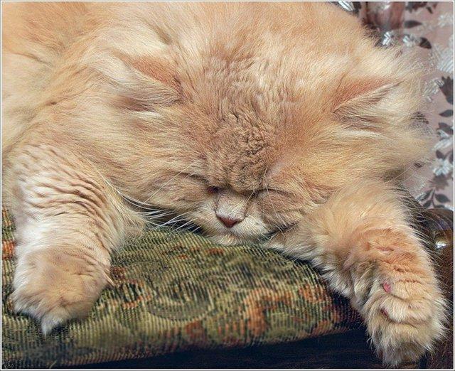 в разном возрасте у кошки