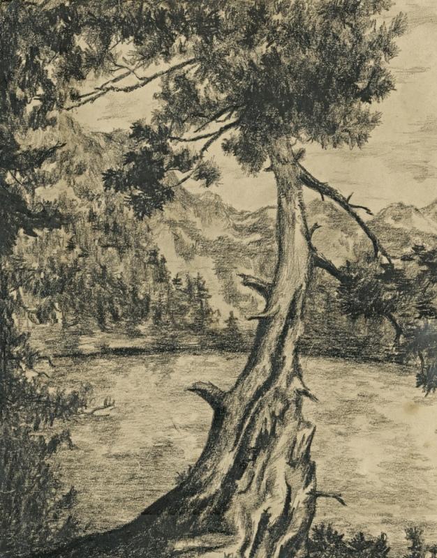 Такую лесную красавицу можно нарисовать всего за три шага.