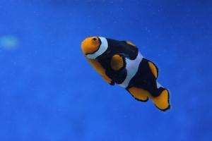 Анимированный аквариум позволит отдохнуть глазам от работы