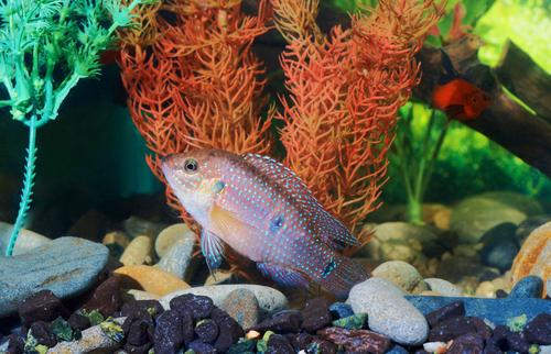 Аквариум с рыбками и хорошим фильтром - отличное лекарство от стрессов