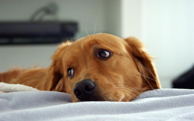 как узнать какая порода у собаки