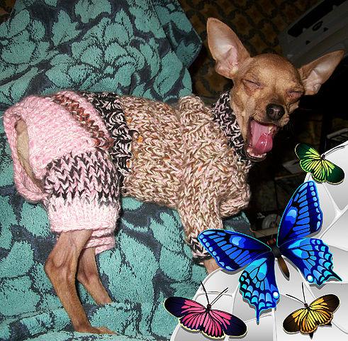 Как связать собаке одежду