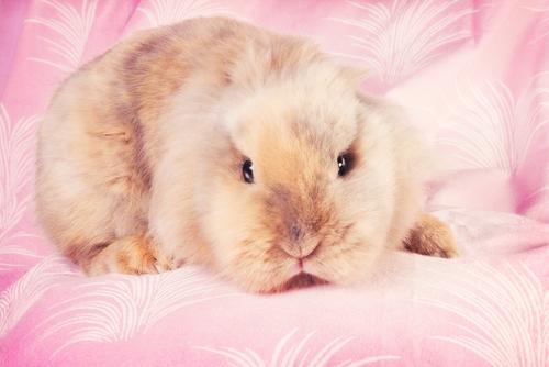 Декоративные кролики - очень милые и забавные создания.