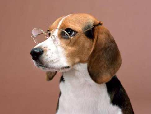 По мнению собаководов, кличка собаки напрямую влияет на ее характер.