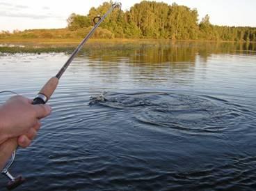 Как ловить щуку на спиннинг