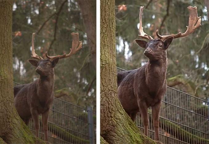 Небольшая обработка в Фотошопе способна значительно улучшить фото