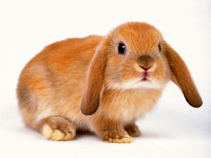 как из бумажки зделать кролика
