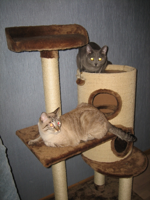 сделать кошке домик