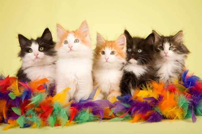 How to teach kittens to the house
