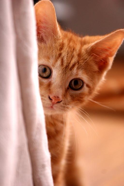 как почистить маленькому котенку уши
