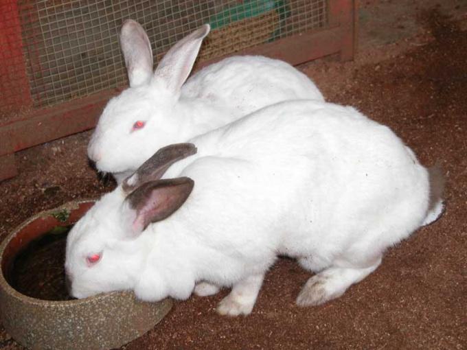 Кролики - идеальные животные для мини-фермы