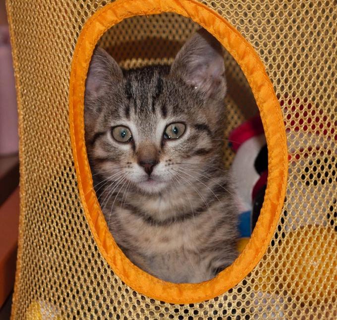 За кошачьей шерстью нужен тщательный уход