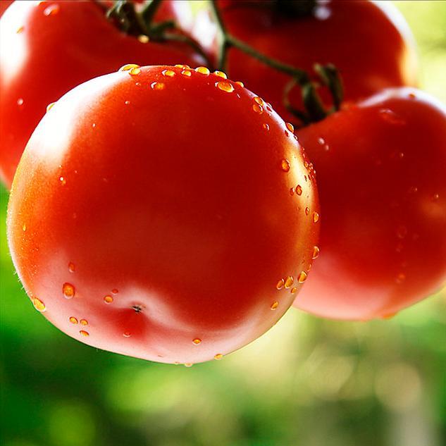 Нет ничего вкуснее выращенных на своем огороде овощей