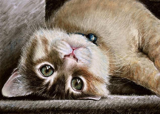 Как научиться рисовать кошек