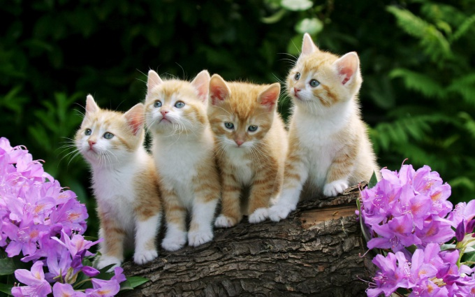как отличить котят