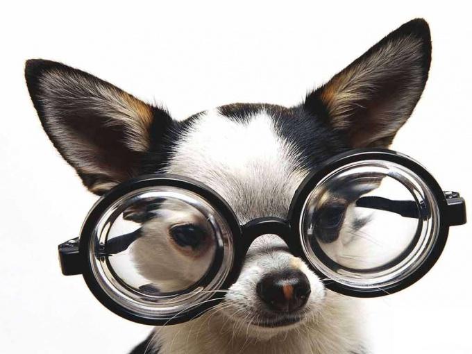Именно ум и интеллект отличают человека от любого другого млекопитающего.