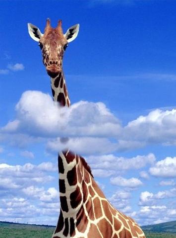 Жираф - самое высокое животное на планете.