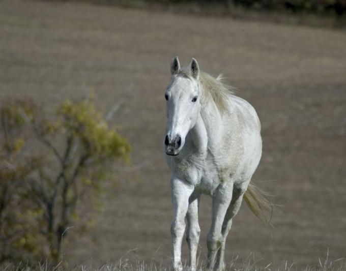Как назвать <strong>коня</strong>