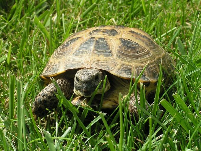 как черепаху разлечить девочка или мальчик