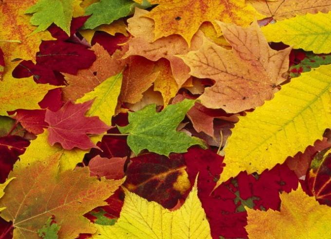 Листья различных растений всегда отличаются друг от друга