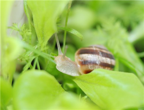 How to get rid of snails