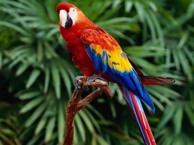 чем лечить попугая