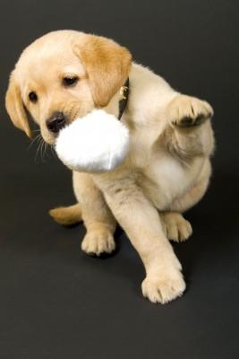 щенка кусаться за руки