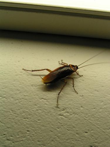 Какое отвратительное создание - таракан