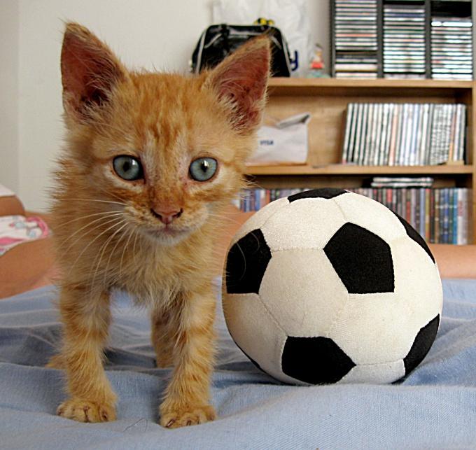 Используйте предметы, которые нравятся кошке