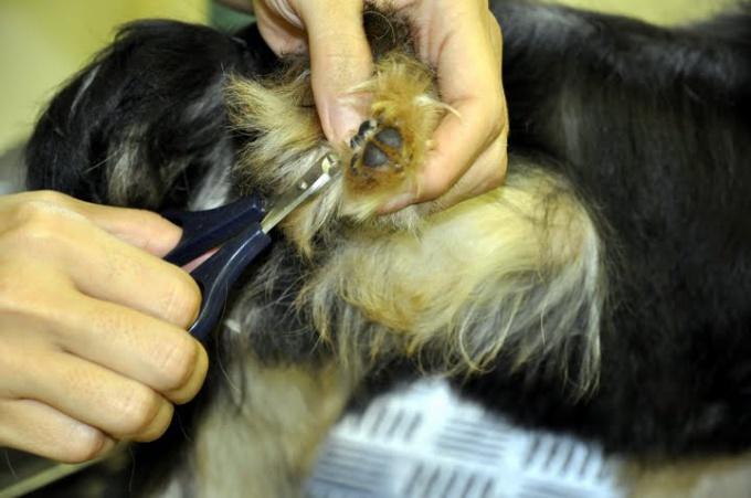 стричь когти собакам