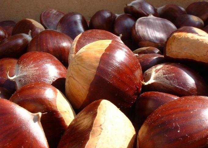 Выбирая каштаны для готовки, отдавайте предпочтение крупным глянцевым плодам