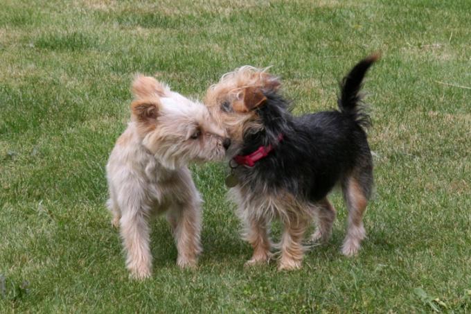 как правильно вязать собак
