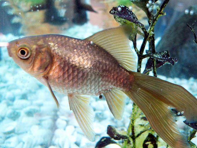 Обитатели аквариума должны чувствовать себя комфортно