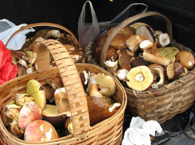 Чтобы сохранить грибы, их нужно переработать