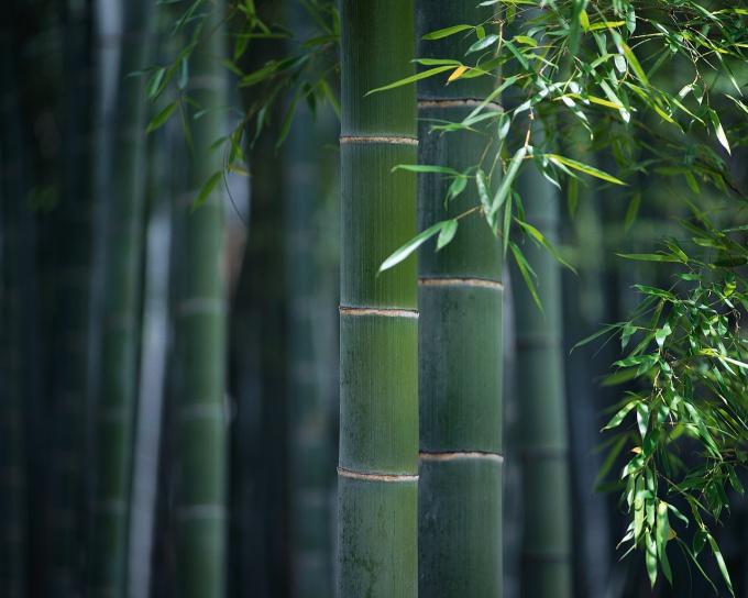 Бамбук станет украшением вашего интерьера