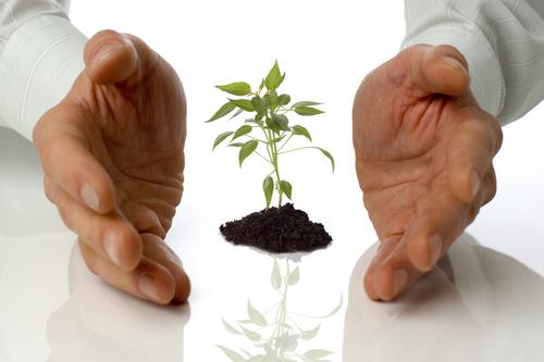 Залог хорошей рассады - качественные семена