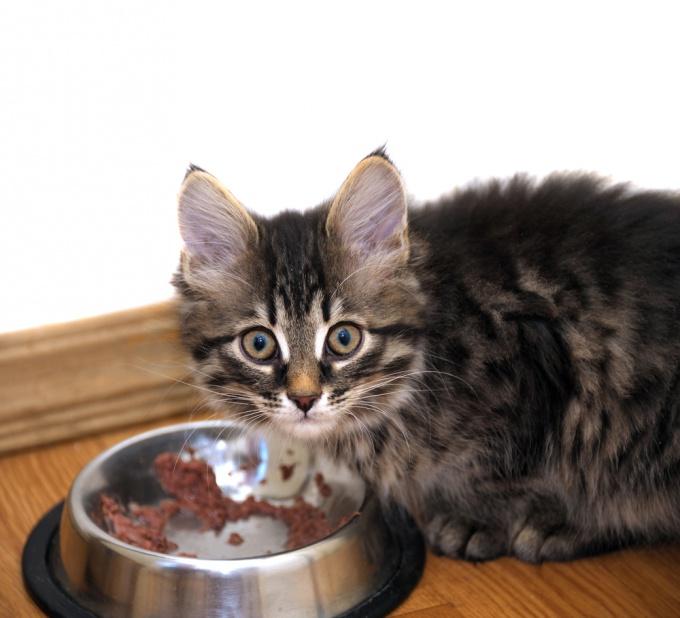 Как научить котенка есть