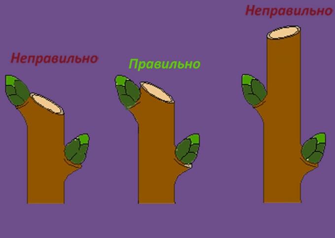 Как обрезать деревья