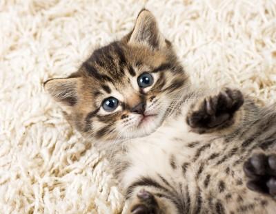 когти кошки впились в руку