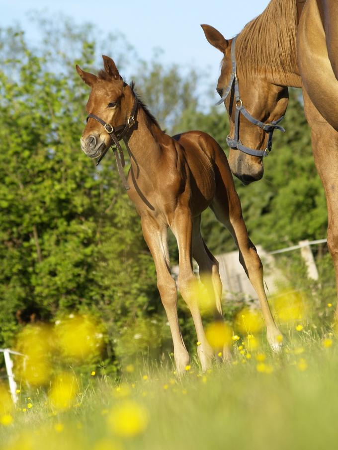 как правильно дать кличку лошади девочке