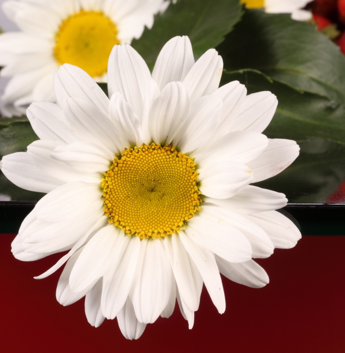 Как связать цветы крючком