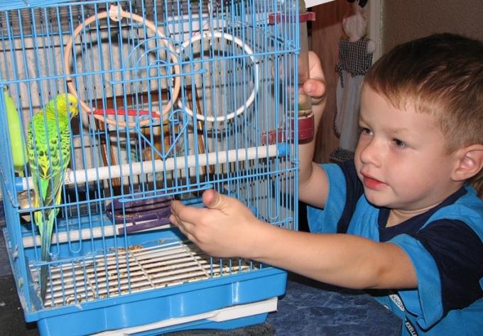 Попугай - домашний любимец многих современных семей.