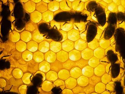Рассерженные пчелы могут и ужалить - берегитесь!