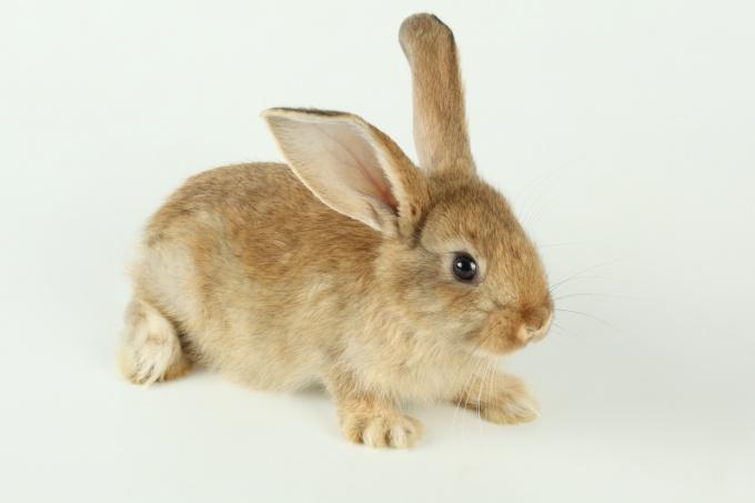 бить кролика