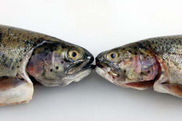 Выбирайте только свежую рыбу!
