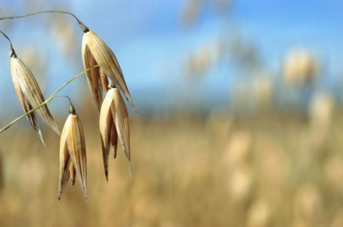 Отвары и настои некоторых трав помогут вам избавиться от токсинов