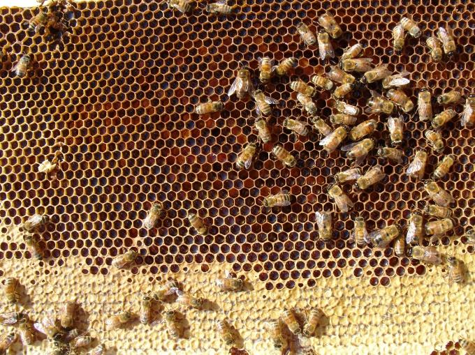 Пчелы нуждаются в постоянном жилище